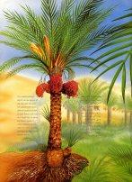 date palm314
