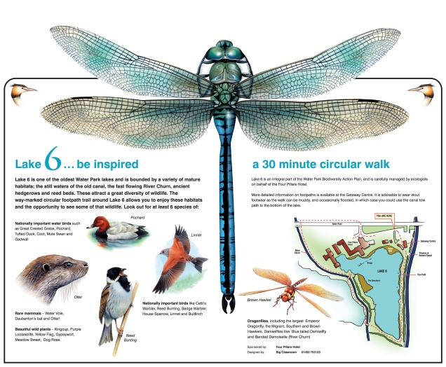 dragonfly board 2 - Layout 1