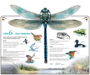 dragonfly board 2 - Layout 2