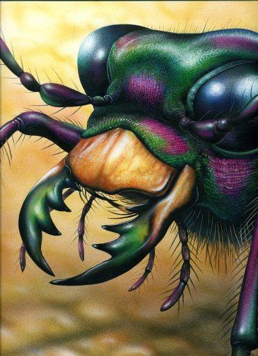 ground beetle170