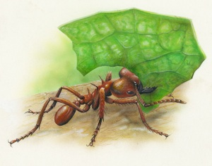 L C Ant 1 8