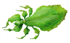 Leaf insect 2577