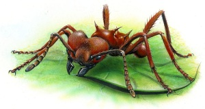 leafcutter ant033