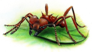 Leafcutter ant438