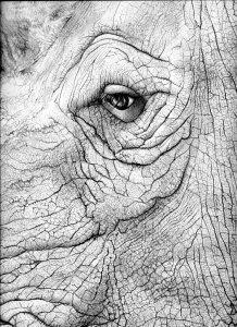 rhino close up 2 hi072 2