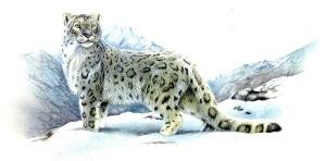 snow leopard057