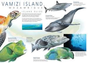Vamizi Island Leaflet 1