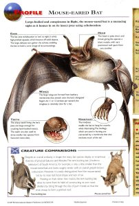 mouse eared bat page065
