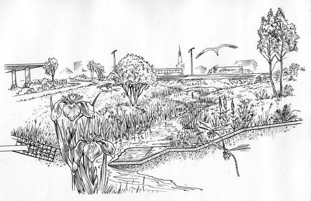 Wetland swale008